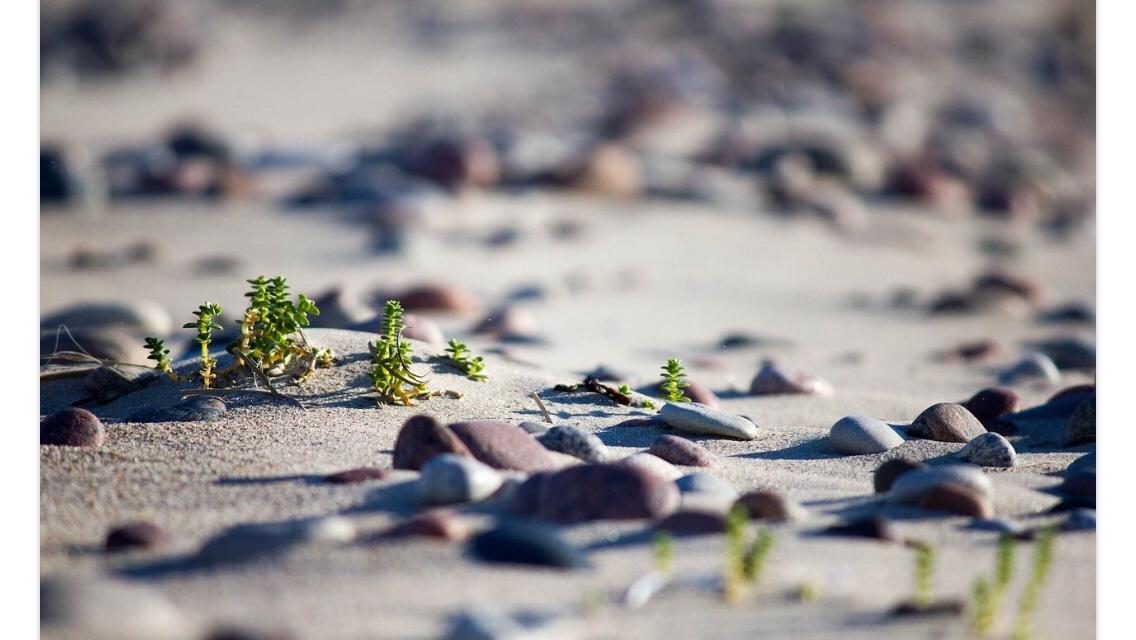 Sandy beach image