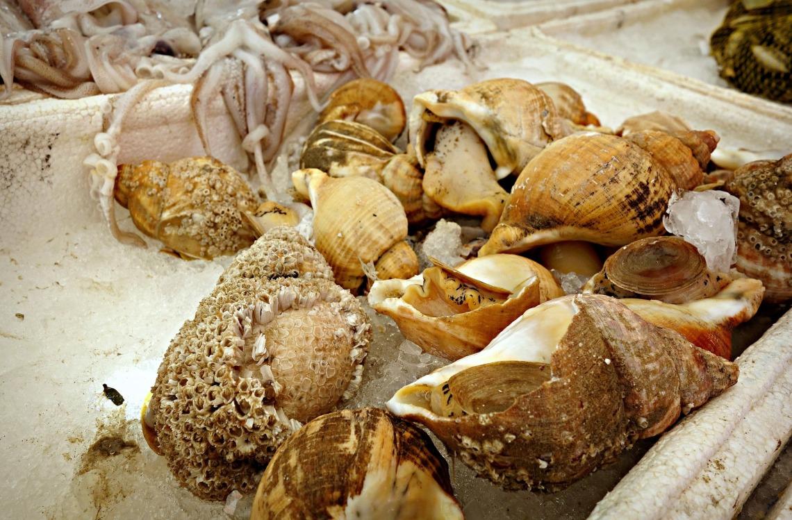 seashell-1523022_1920